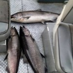 Summer_Chinook_Salmon_Hurds_Guide_Service_03