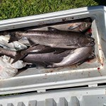Summer_Chinook_Salmon_Hurds_Guide_Service_04