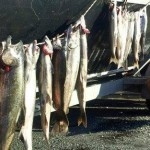 Summer_Chinook_Salmon_Hurds_Guide_Service_14