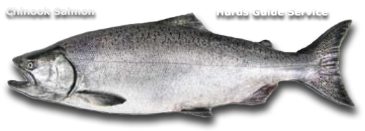 Chinook Salmon Fishing - Hurds Guide Service