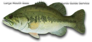 Large Mouth Bass Fishing - Hurds Guide Service