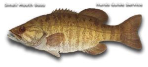 Small Mouth Bass - Hurds Guide Service
