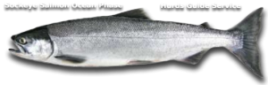 Sockeye Salmon Fishing - Hurds Guide Service
