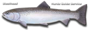 Steelhead Fishing - Hurds Guide Service