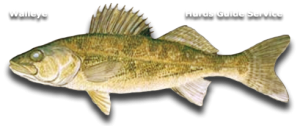 Walleye Fishing - Hurds Guide Service