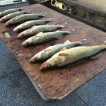 Banks_Lake_Walleye_Hurds_Guide_Service_13