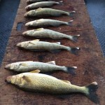 Banks_Lake_Walleye_Hurds_Guide_Service_19