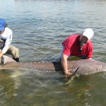 Sturgeon_Fishing_Hurds_Guide_Service_02