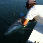 Sturgeon_Fishing_Hurds_Guide_Service_34