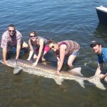 Sturgeon_Fishing_Hurds_Guide_Service_54