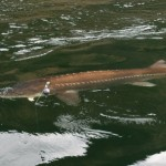 Sturgeon_Fishing_Hurds_Guide_Service_56