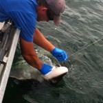 Sturgeon_Fishing_Hurds_Guide_Service_58