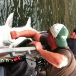Sturgeon_Fishing_Hurds_Guide_Service_60