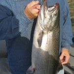 Spring_Chinook_Salmon_Hurds_Guide_Service_39