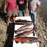 Vernita_Hanford_Reach_Fall_Chinook_Salmon_Hurds_Guide_Service_12