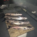 Vernita_Hanford_Reach_Fall_Chinook_Salmon_Hurds_Guide_Service_24