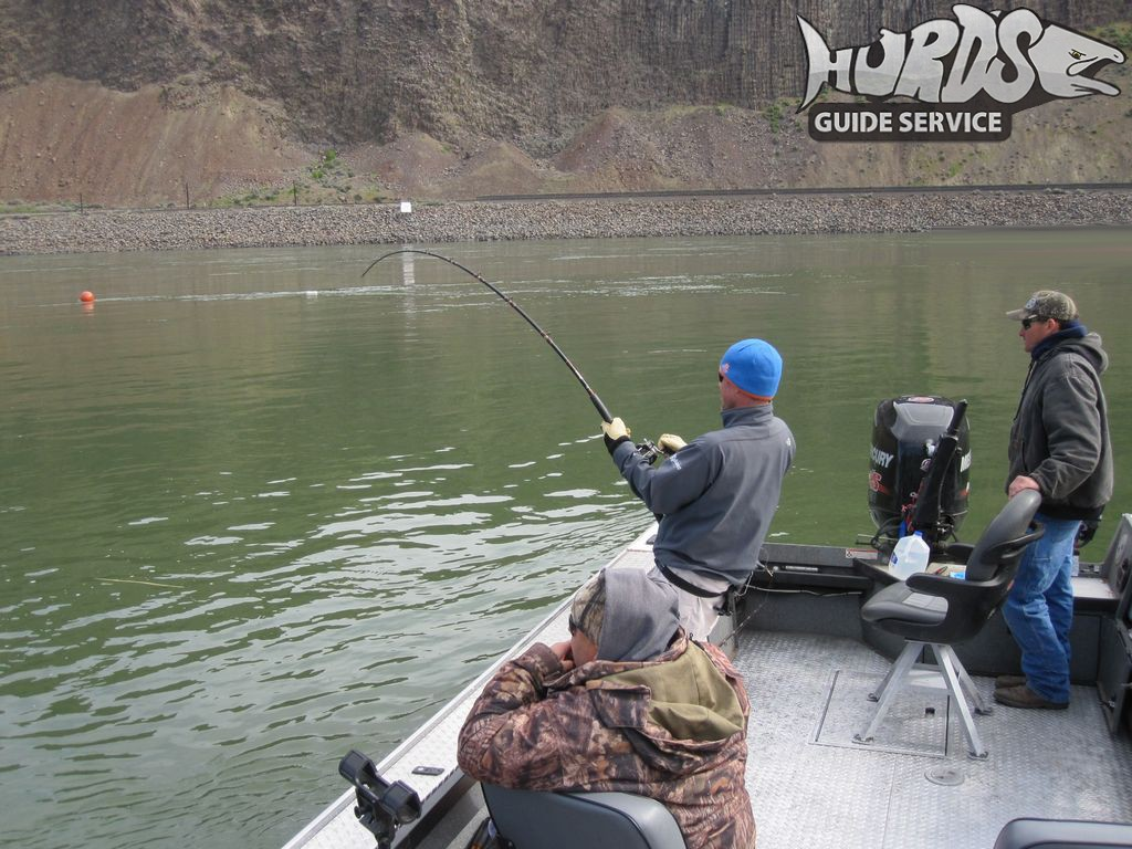 Sturgeon photos 2 hurds guide service for Fishing columbia river